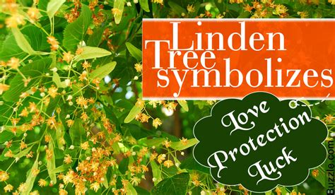 what do trees represent acquaint yourself with what a linden tree symbolizes