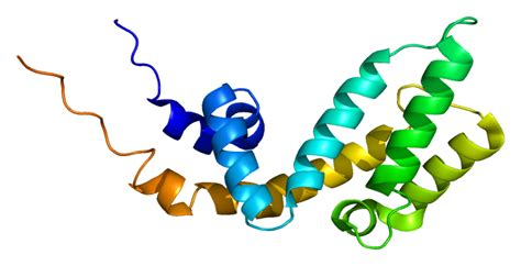 protein pattern finder axin1 wikipedia