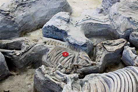 ashfall fossil beds state historical park evolution world tour ashfall fossil beds nebraska arts