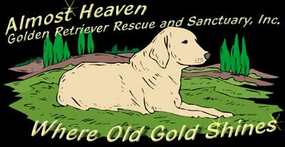 almost heaven golden retriever about almost heaven golden retriever rescue and sanctuary inc