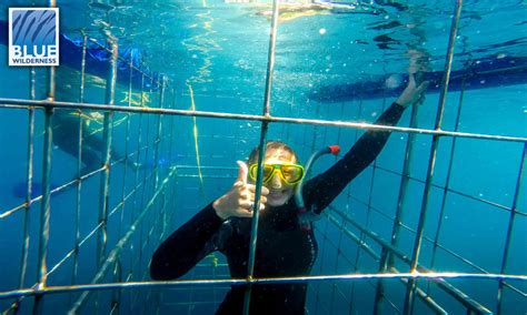 cage dive with sharks shark cage diving at durban s aliwal shoal