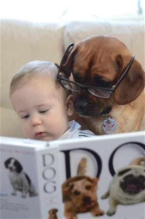 learn to read with bat boy and pup a dolch sight word book bat boy and pup level 2 k 2nd grade books 17 best images about s on pug