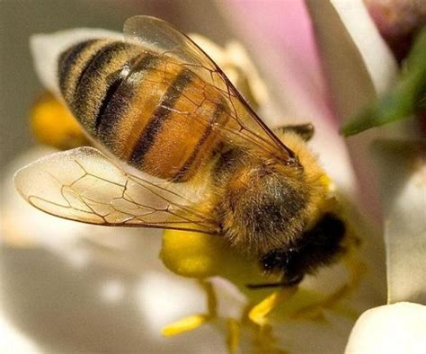 libro minicuentos de abejas y las abejas y la desaparici 243 n de la vida en la tierra