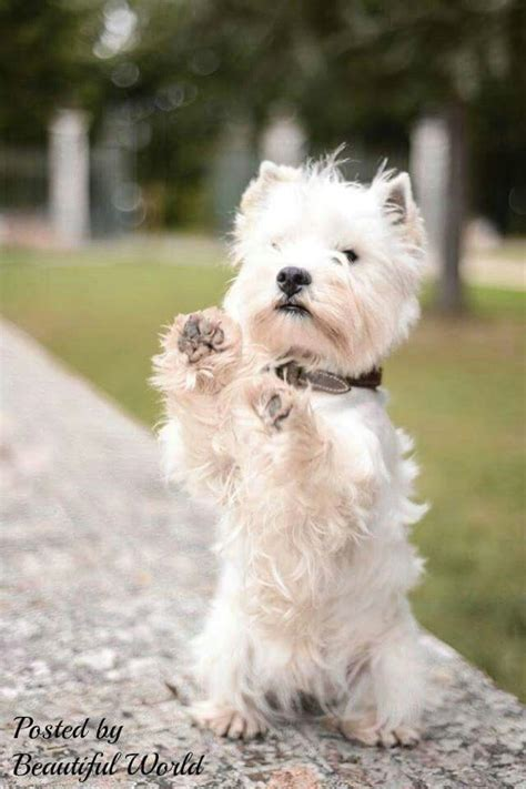 10 best big dog breeds for families babble pets 10 best big dog breeds for families babble pets