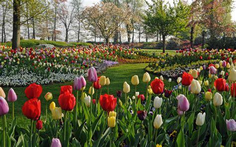 ci di fiori olanda nel paese dei tulipani livingcorriere