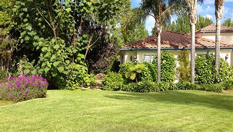 caring for bonie flooring southern california gardening lawn care for fall