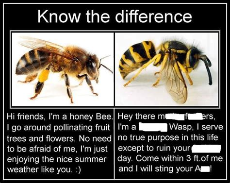 Bee Meme - bug eric bee vs wasp memes perpetuate ignorance