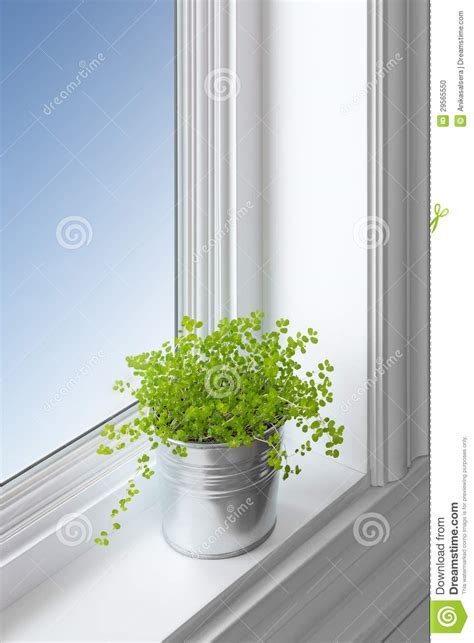 green plant on a window sill stock photo image 29565550