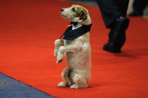 house for dogs movie 2012 white house correspondents association dinner