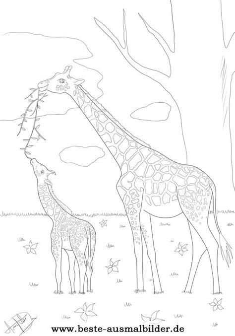 giraffe malvorlage kostenlose ausmalbilder von tieren fuer