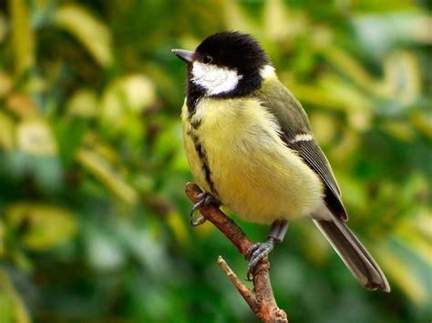 birds choose spring neighbors based on winter friendships