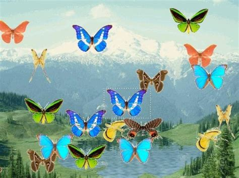 download fantastic butterfly screensaver animated animated butterfly pond screensaver 1 0 free download