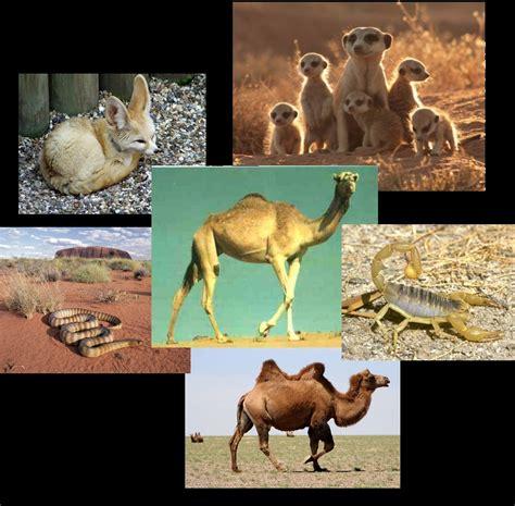 imagenes de animales del desierto imagenes de animales que viven en el desierto