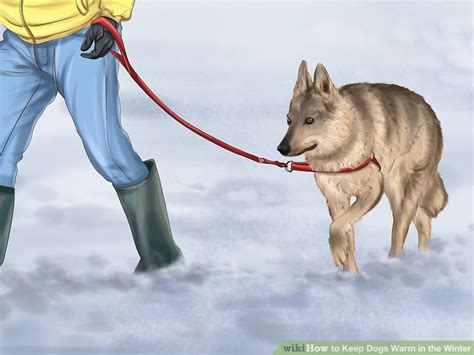 how to keep dogs warm in winter 4 easy ways to keep dogs warm in the winter with pictures