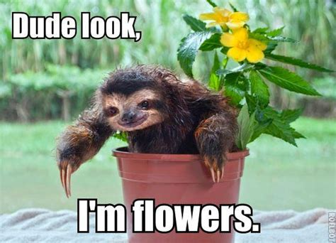 Cute Sloth Meme - veeva on twitter quot one happy sloth funny smile