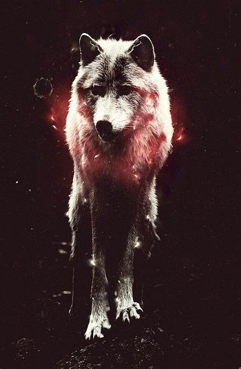 wallpaper cool wolf wolf image 2722991 by miss dior on favim com