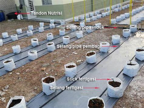 Fertigasi Dan Hidroponik 10 tahap mudah dan panduan lengkap budidaya melon