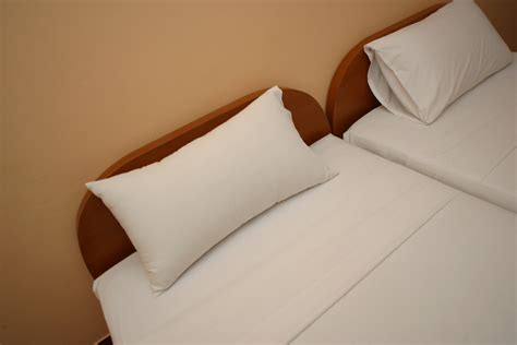little brown bugs in bed little brown bugs in the bed healthy living