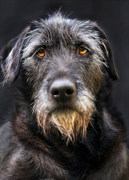 dogs with beards guess that mutt 5 photos thatmutt a