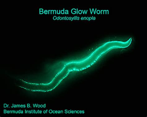 last of the glow worms memoir of a nuclear weapons technician at the end of the cold war books bios academy msi bermuda s bio luminesence