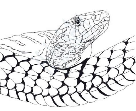 copperhead snake coloring page 47 best images about wow color pages on pinterest