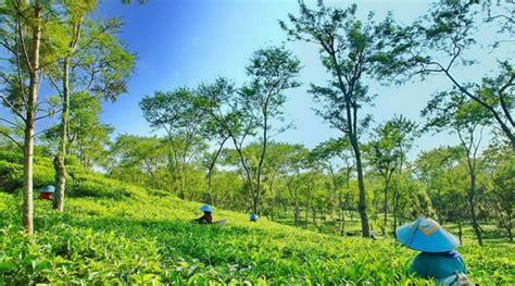 kebun teh wonosari wisata alam  malang motormalangcom