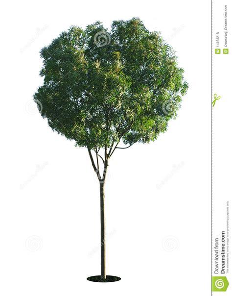 een dierenspeciaalzaak met een u een boom met een witte achtergrond no10 royalty vrije
