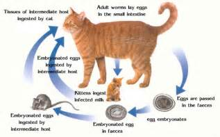 Cat worms the symptoms and how you can get rid of them