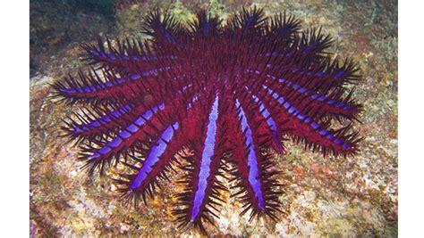 tapak sulaiman ancam terumbu karang terkenal  filipina