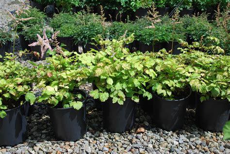 Planters Choice Newtown Ct by Perennials Planters Choice