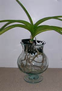 my vanda in glass l vase orchid board most