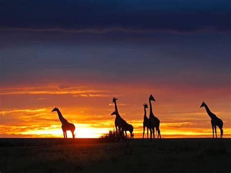 imagenes i love kenia consejos para viajar a kenia