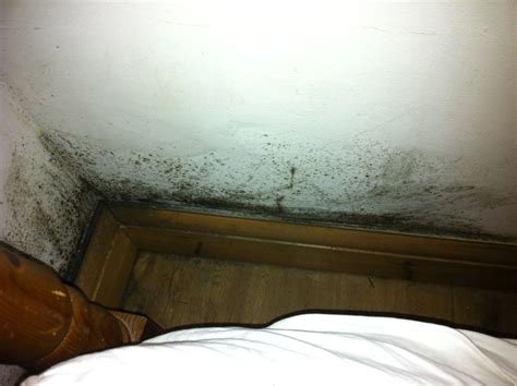 Bedroom Wall Has Mould Removal Of Black Mould In Bedroom And Identify Cause