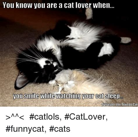 Cat Lover Meme - you know you are a cat lover when you smile while watching