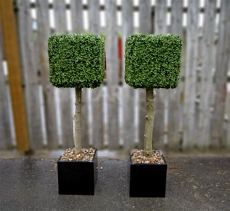 artifical topiary plantart artificial boxwood topiary square trees