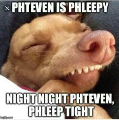Phteven Meme - 25 best tuna dog ideas on pinterest rogers internet