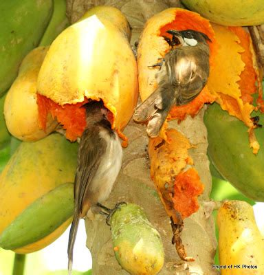 birds stripping the fruit off your trees protect fruit