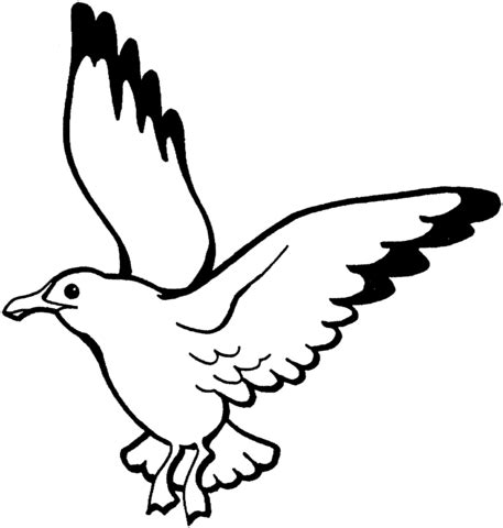 Flying Seagull Coloring Page sketch template