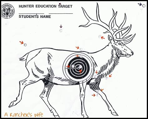 printable animal shooting targets city life to ranching wife dreaming big and passing the