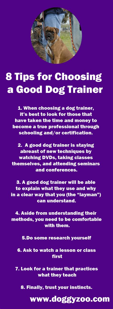 8 tips for choosing a trainer doggyzoo