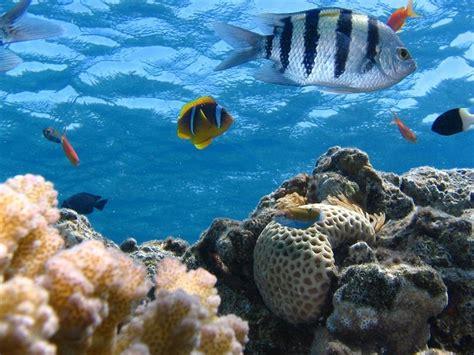 los animales marinos marine animales marinos la vida en los oc 233 anos se enfrenta a