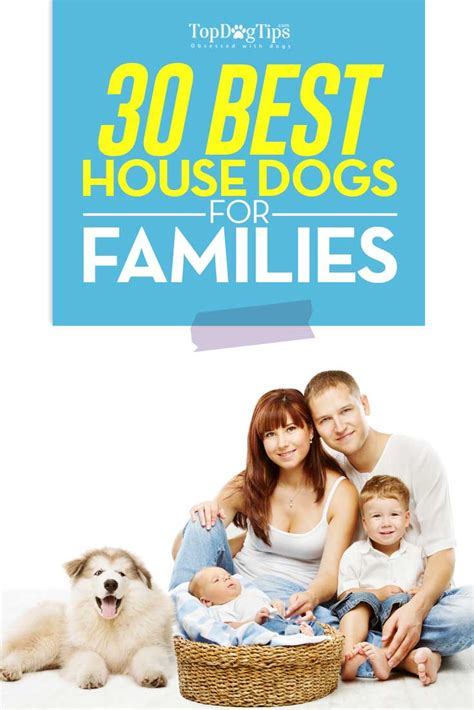 house dogs breeds 30 breeds that are good house dogs perfect for families
