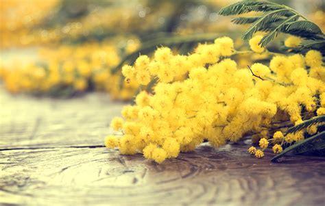 festa della donna fiori festa della donna 2016 carollo fiori zugliano vi