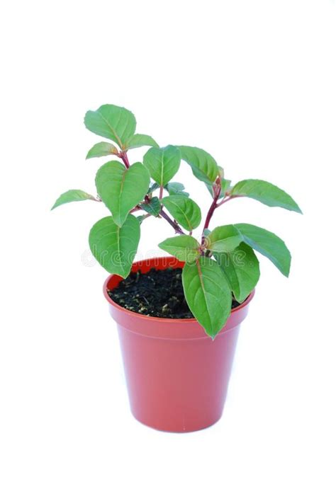 Small Potted Plant Isolated On White Stock Photo Image | small potted plant isolated on white stock photo image