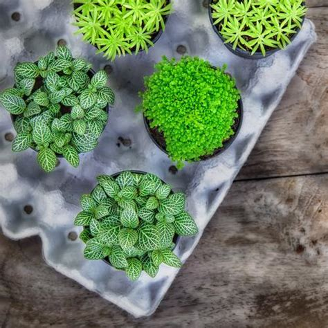 eco friendly diy projects eco friendly diy projects you can make with your kids