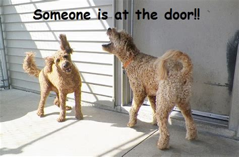 how to get dogs to stop in the house how to get your to stop barking out the window or at the doorbell just dogs playcare