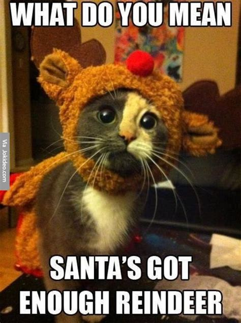 Sad Animal Memes - 30 funny animal christmas quotes cutest cats