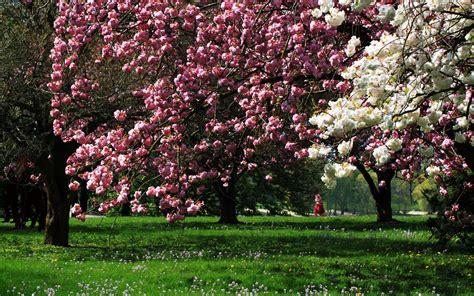 immagini paesaggi fioriti sfondi alberi 42 immagini
