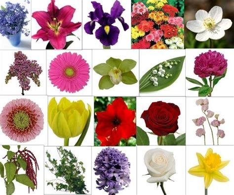 28 best images about flowers on pinterest how to draw flowers flower and pansies