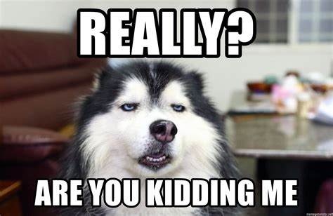 You Kidding Me Meme - really are you kidding me sarcasm dog meme generator